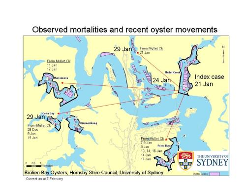 Oyster movements